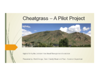 Cheatgrass – A Pilot Project