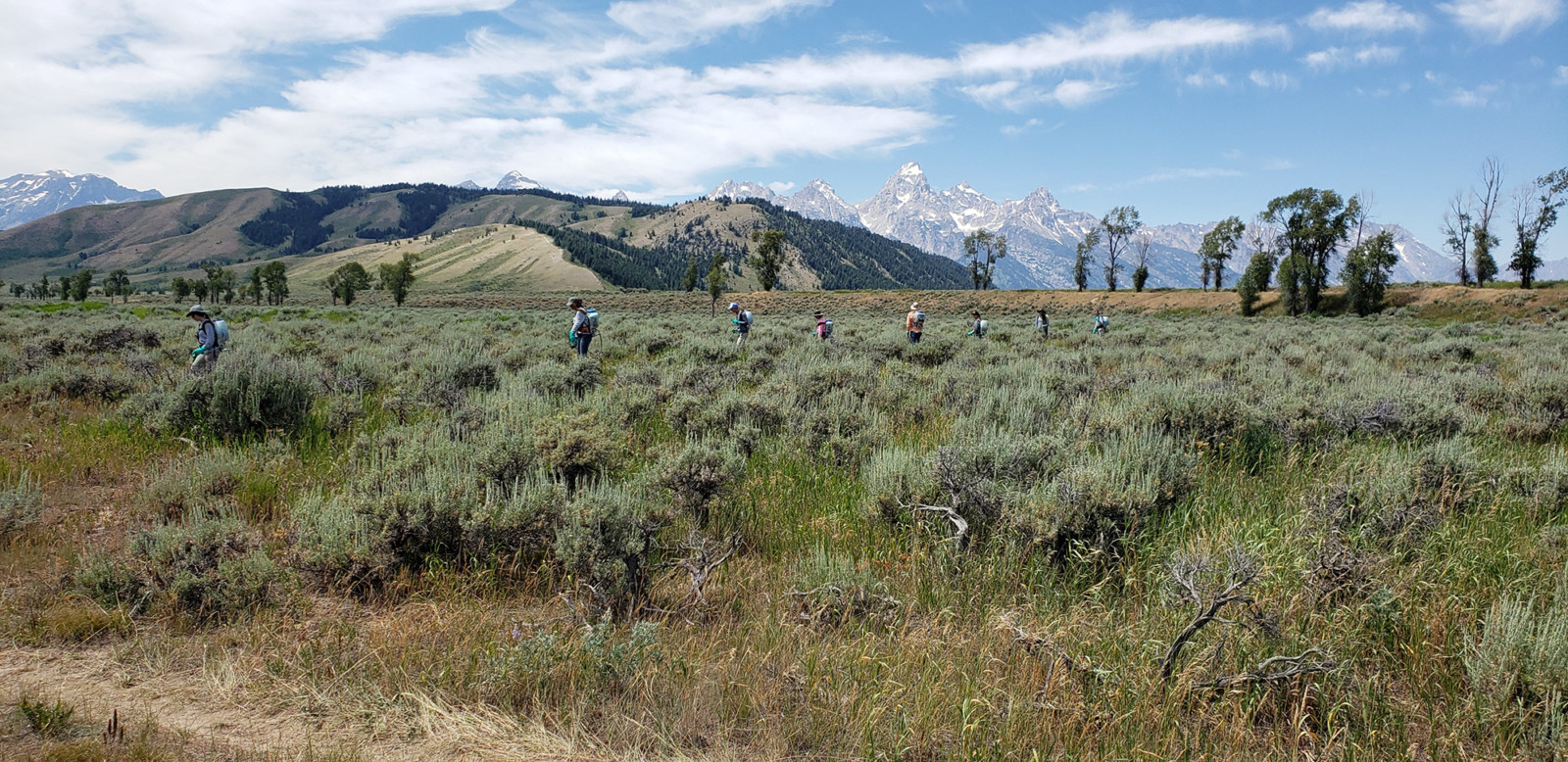 Gros Ventre River Spray Days 2018 - Invasive Species Control
