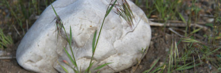 Weed of the Month: Cheatgrass Treatment