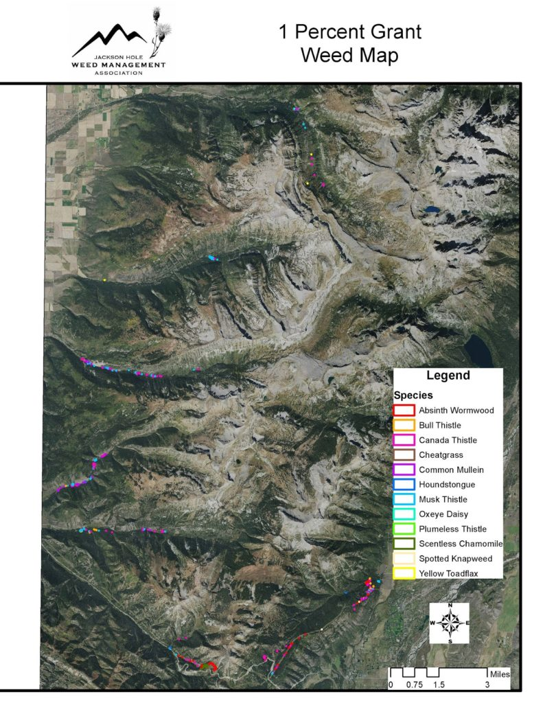 JHWMA Caribou/Targhee Teton National Forest - 1% Grant Weed Map