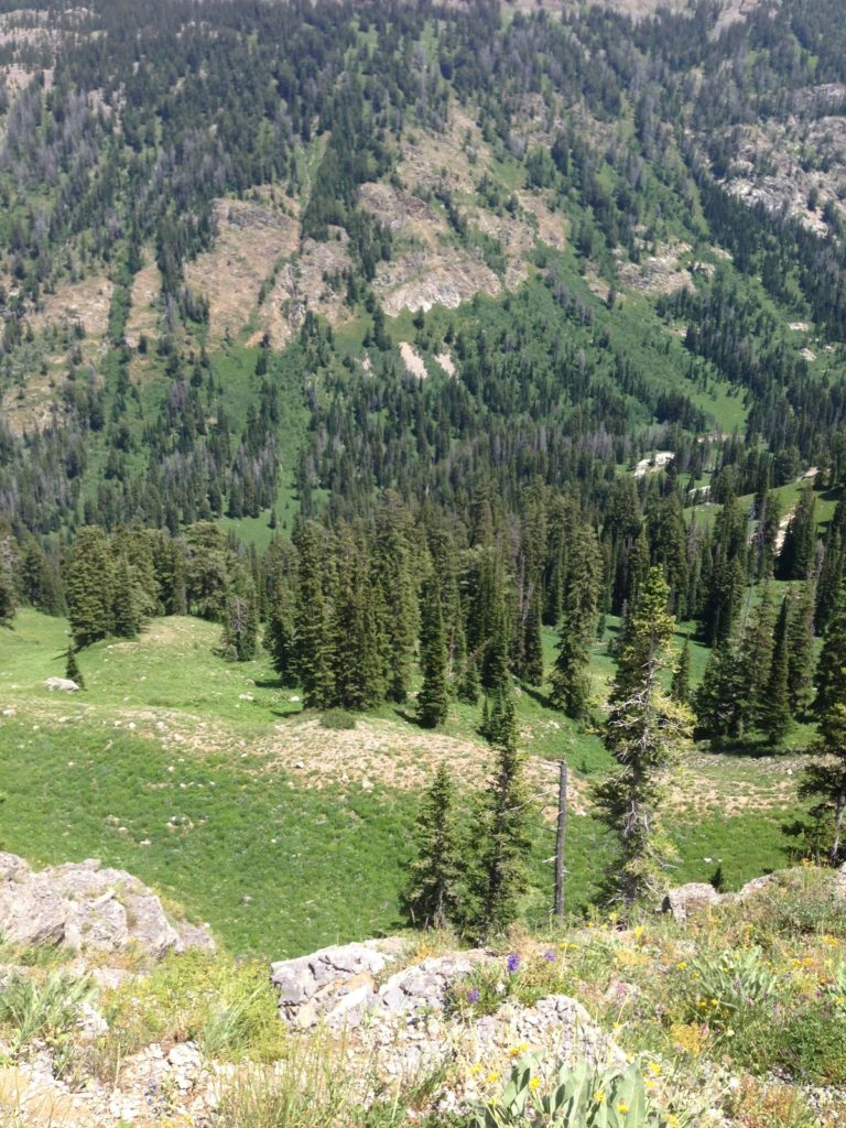 JHWMA Caribou/Targhee Teton National Forest - Forest Image 2