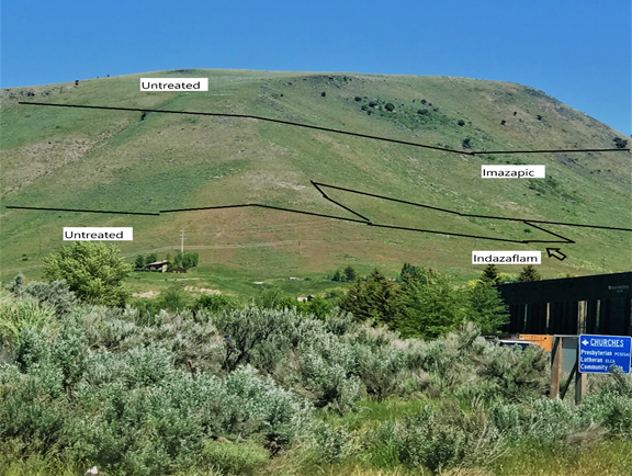 JHWMA Cheatgrass Mitigation Project - 2018 Treatment Results, Image 2