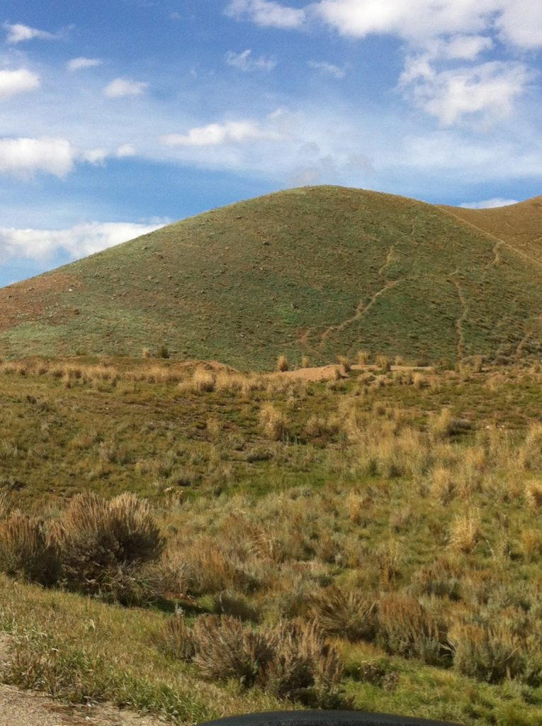 JHWMA Cheatgrass Mitigation Project - Cheatgrass on Hills image