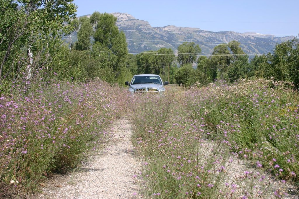JHWMA - Gros Ventre River Spray Days Truck Coming up Road with Noxious Weeds image