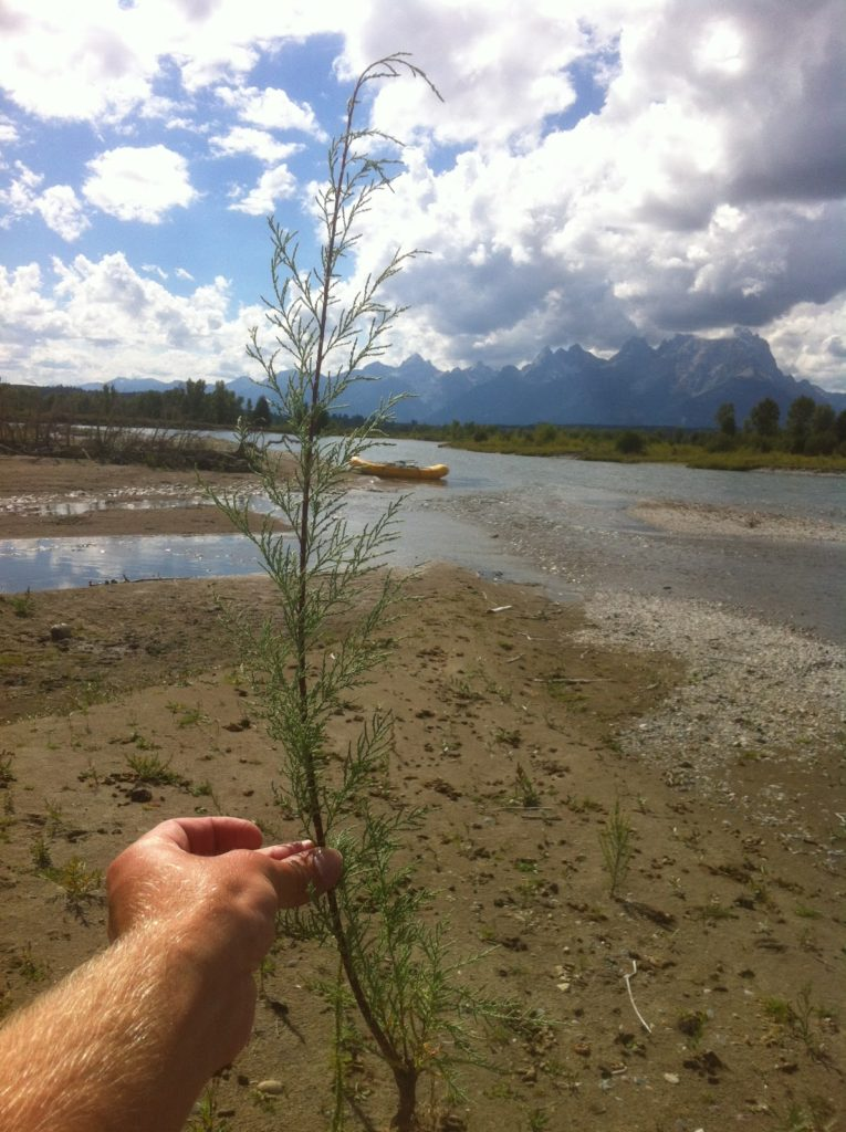 Snake River Project - Holding Weed Up by River image 2