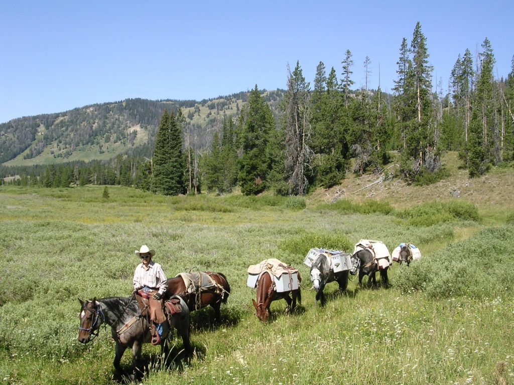 JHWMA - Backcountry Horseback Spraying Horse Train Image