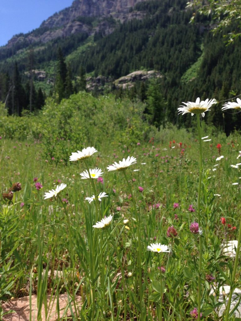 JHWMA Caribou/Targhee Teton National Forest - Weeds in Forest image 2