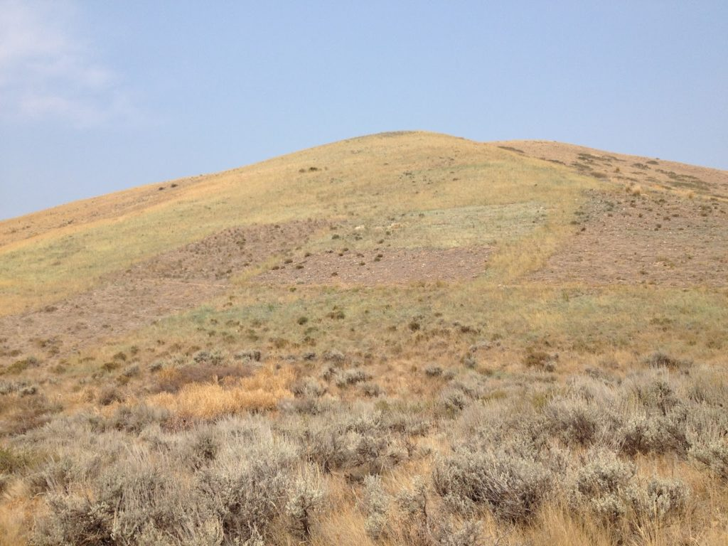 JHWMA Cheatgrass Mitigation Project - Sample of Treated Cheatgrass Areas image