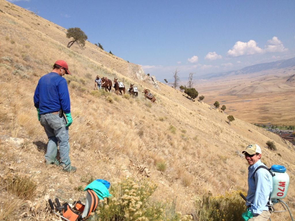 JHWMA Cheatgrass Mitigation Project - Field Work on Hillside image