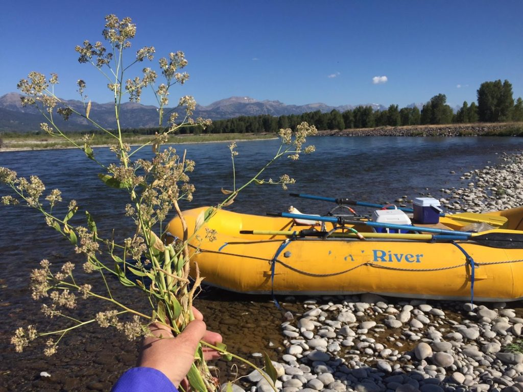 Snake River Project - Holding Weed Up by River image