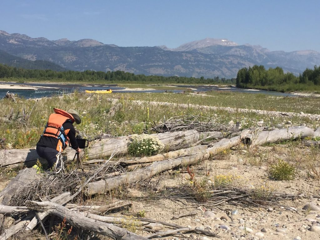 Snake River Project - Stacked Logs and Weeds by River Bank image